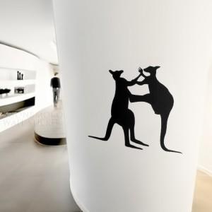 kangourou qui se battent